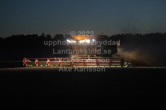 potatis1201