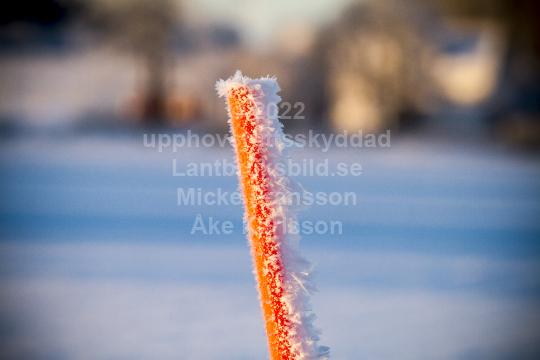 skog011
