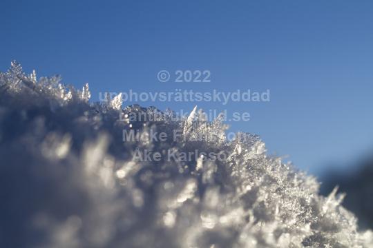skog016