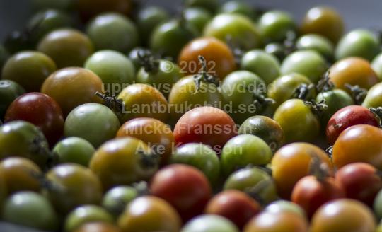 skog018