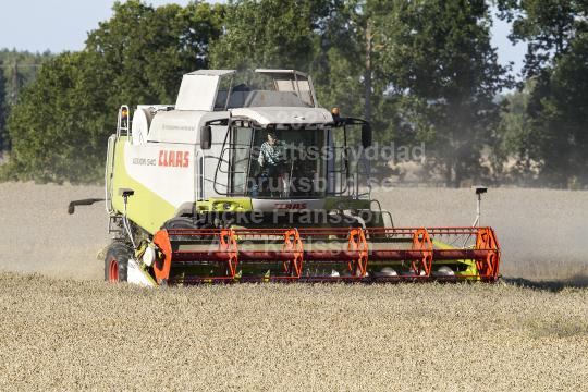 skog1302