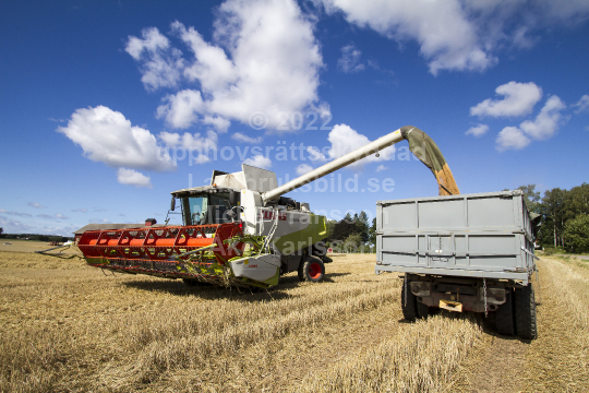 skog201107
