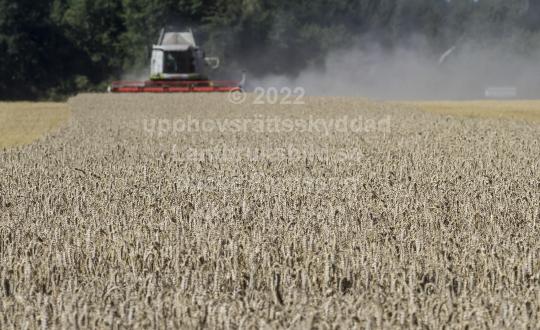 skog201124