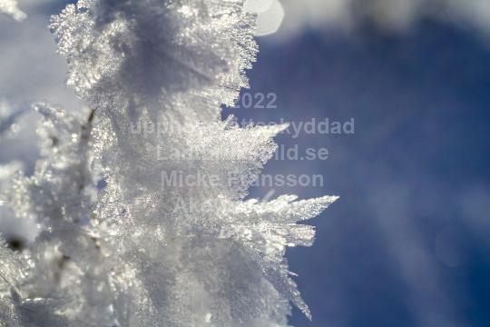 skog201125