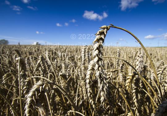 Skogsbruk (60)